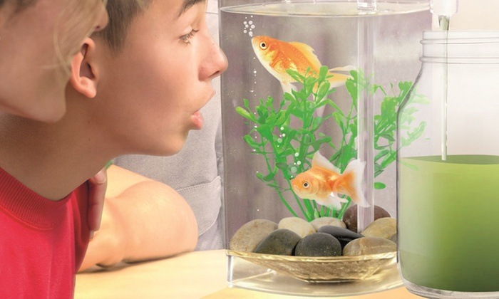 fish wonder self cleaning aquarium one 15 or two 25 don t